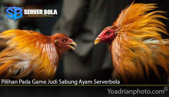 Pilihan Pada Game Judi Sabung Ayam Serverbola