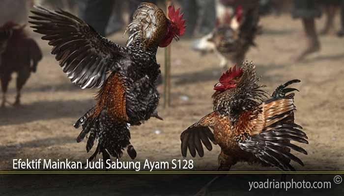 Efektif Mainkan Judi Sabung Ayam S128