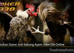 Tips Taruhan Game Judi Sabung Ayam Joker338 Online